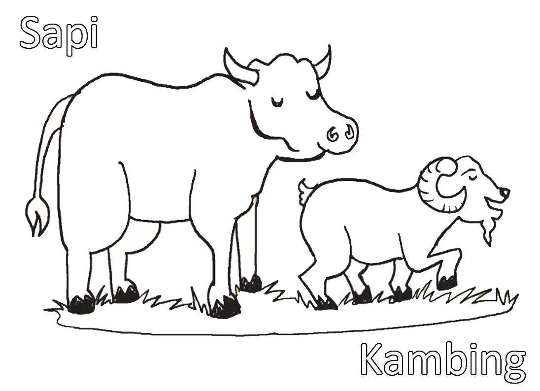 contoh gambar mewarnai hewan kambing