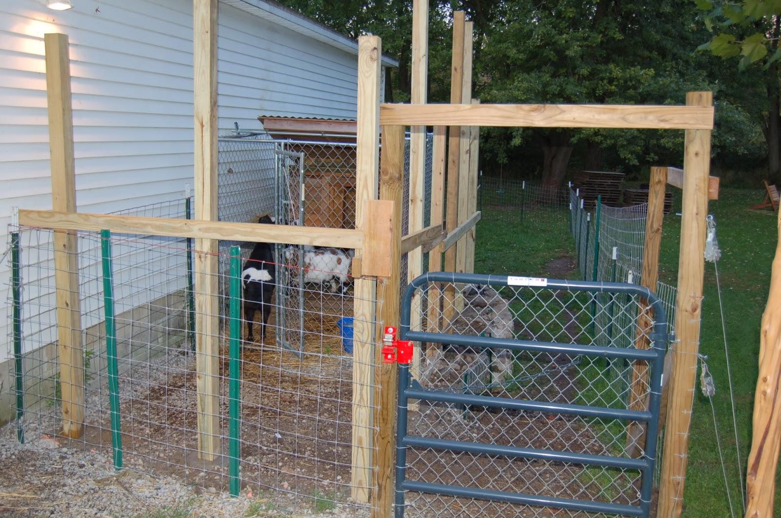 Our Little Backyard Farm Pallet Goat Shed