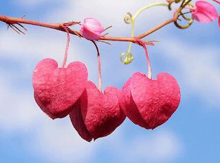 Best Romantic Love Poem For Her –Girlfriend Poems