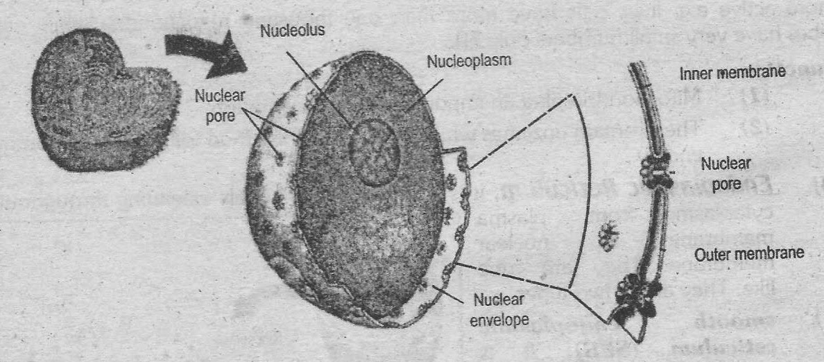 Notes Guide Book: Write down the structure of an animal cell.