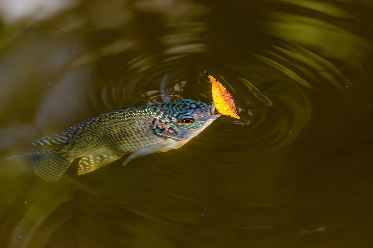 Kalkulator Populasi Ikan Survival Rate Hitung Sr Merupakan Tingkat Kelangsungan Hidup Suatu Jenis Dalam Proses Budidaya Dari Mulai Awal Ditebar Hingga Dipanen Disini