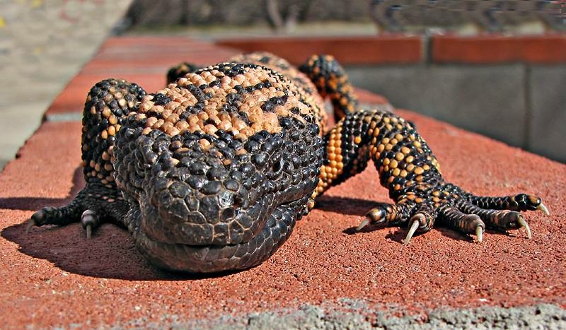 Répteis | Reptiles