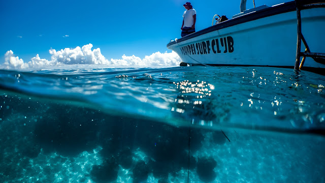 Perfect diving in Pohnpei