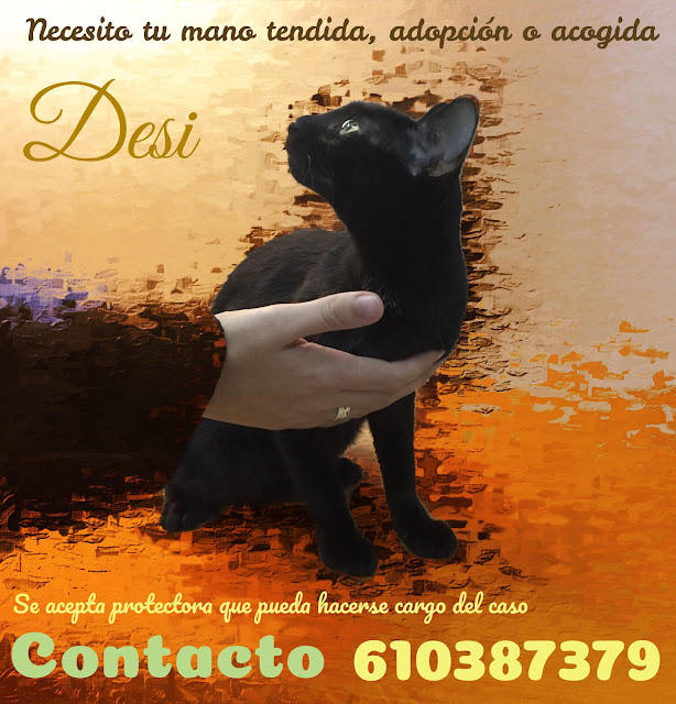 GATO NECESITA FAMILIA-SUCHT EIN ZUHAUSE - LOOKING FOR A HOME