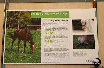 Affiches pour améliorer ses connaissances sur les chevaux lors des Rencontres de la Cense.