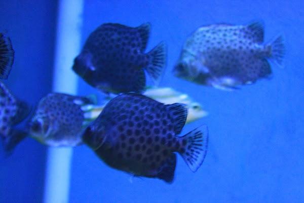 Satwa Dunia Air Ikan Tanjung Bajau - Catatan Nizwar ID