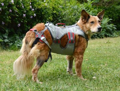 secure rappelling dog harness