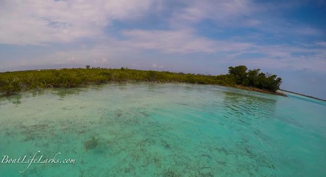Turtle, Mangrove creek, Conception Island, Bahamas