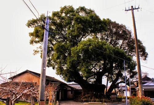 A Walk Around Kyushu Day 54 Hita to Kamiura.