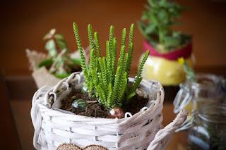Mengenal Apartment Gardening Lebih Dekat