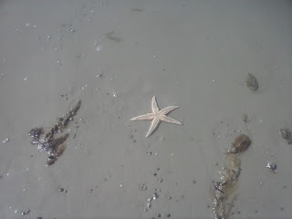 vyplavená hviezdica