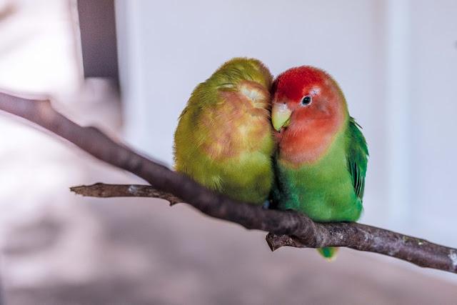 Tips Berkomunikasi Dengan Pasangan Hidup