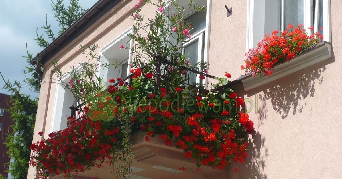 Niepodlewam Kiedy Wynosic Kwiaty Na Balkon