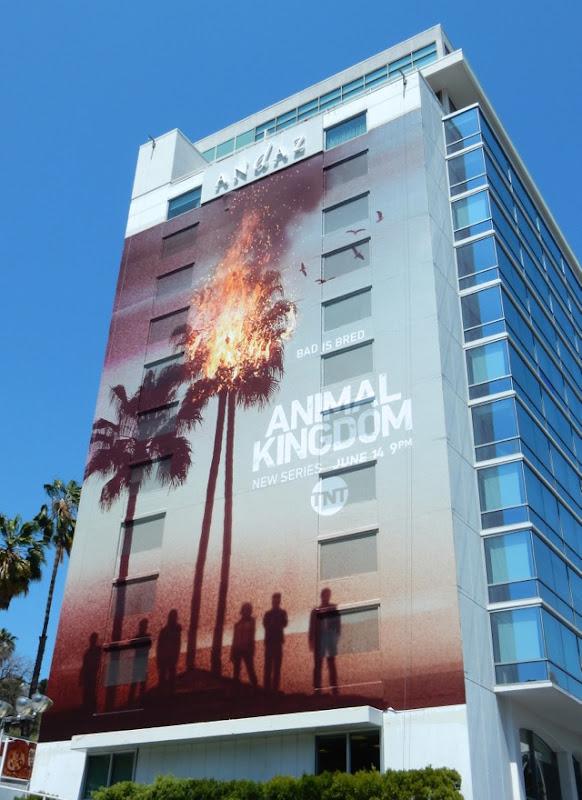 Giant Animal Kingdom TV remake billboard