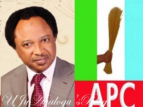 What Buhari's meeting with opposition governors, leaders means – Shehu Sani