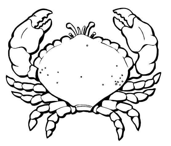 "marine animals "" crab "" coloring sheet"