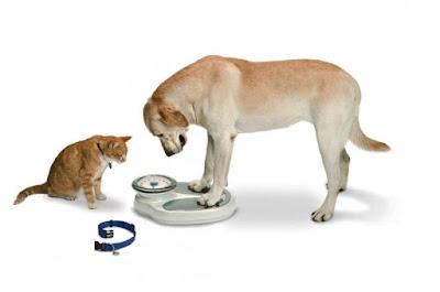 Dijeta za pse i mačke sa smanjenom funkcijom štitne žlezde