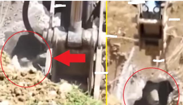 فيديو لعمال بناء يحفرون لتصدمهم مفاجأة جعلتهم يصرخون بأعلى صوت! شاهد المفاجأة المرعبة التي خرجت لهم و ظلّوا يصرخون بشكل متواصل!