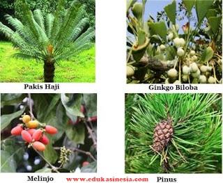 Materi Tumbuhan Biji (Spermatophyta) : Tumbuhan Biji Terbuka (Gymnospermae) dan Tumbuhan Biji Tertutup (Angiospermae)
