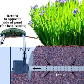 Optimum Veggie, Bog Pond Filter set up