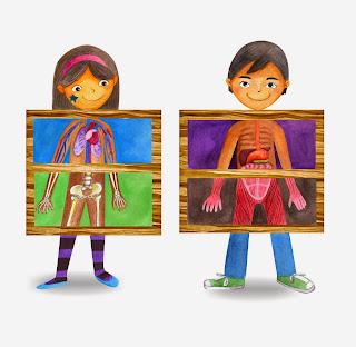 Resultado de imagen de el cuerpo humano por dentro para niños