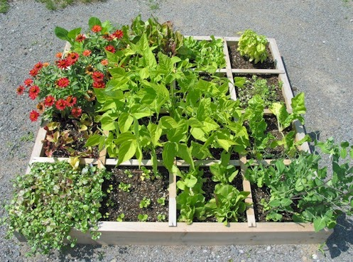 victory homemaking planning our garden square foot gardening 54 Without Planning In A Beautiful Gardening id=36208