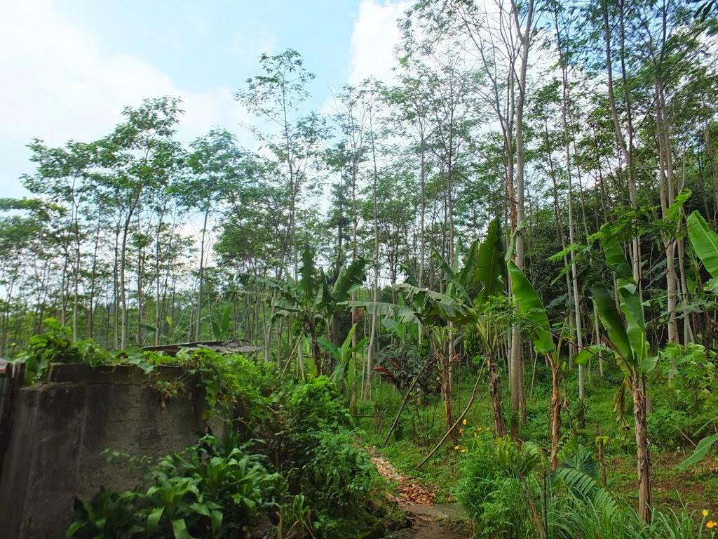 DSCF1811+(FILEminimizer) Jual Tanah Kebun Albasiah 6 HA Di Kec Pacet Jual tanah di cipanas