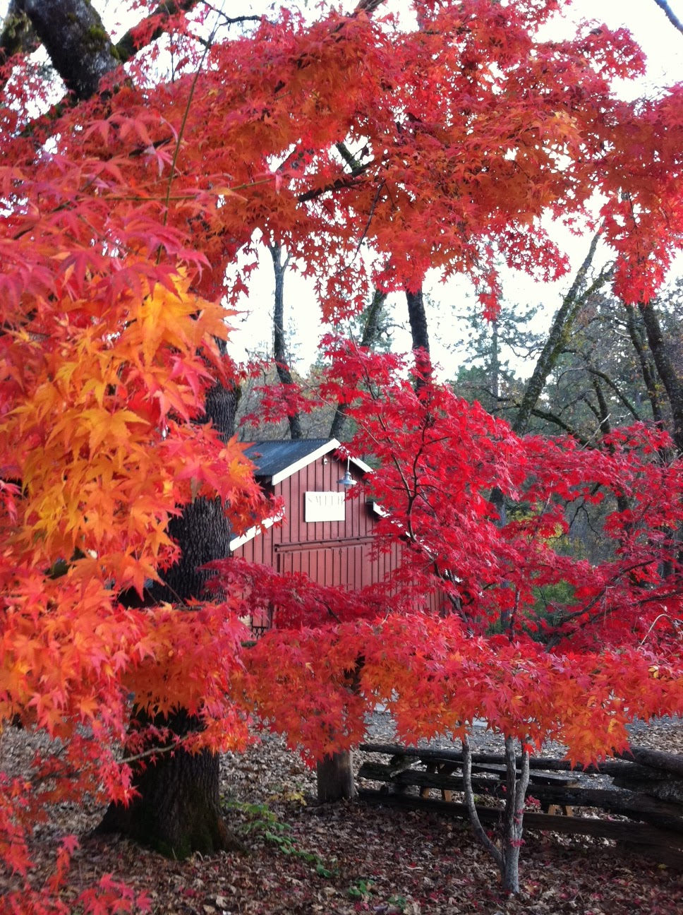 Sierra Foothills Wineries Fall Colors Lure Visitors To