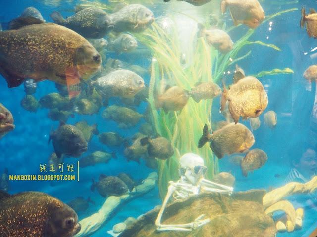 KLCC Aquaria 2017