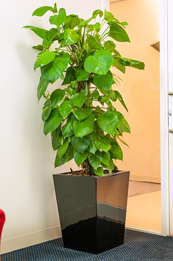 Indoor Plants Maintenance Best Indoor Plants For Office