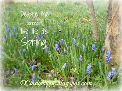 Spring quote, Blue flowers, Muscari, Grape Hyacinth, Lilly Pulitzer quote, Fernwood Gardens, Florals-Family-Faith, Cindy Rippe