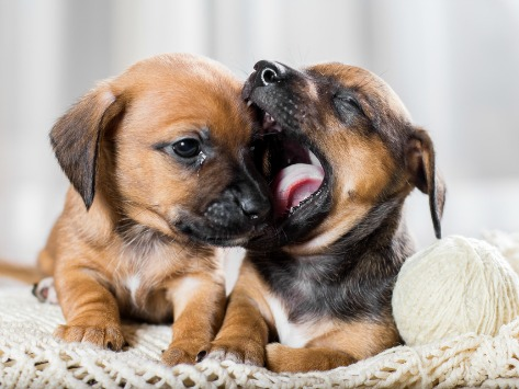 Puppy Biting: Training Methods and Tips