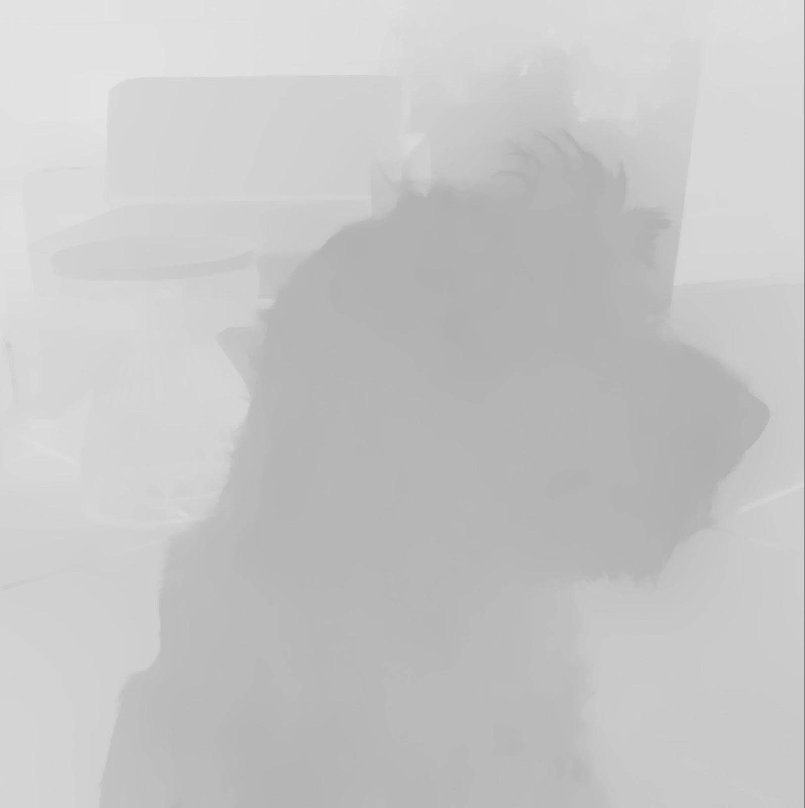 image of a shaggy dog's profile in grayscale and blurred out