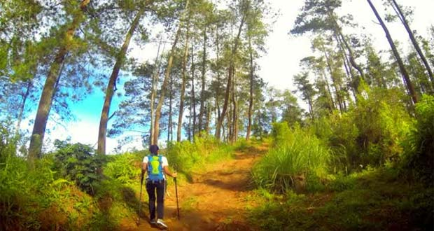 Taman Hutan Jaya Giri (Foto : yukpiknik.com)