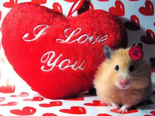 i love you shayari heart