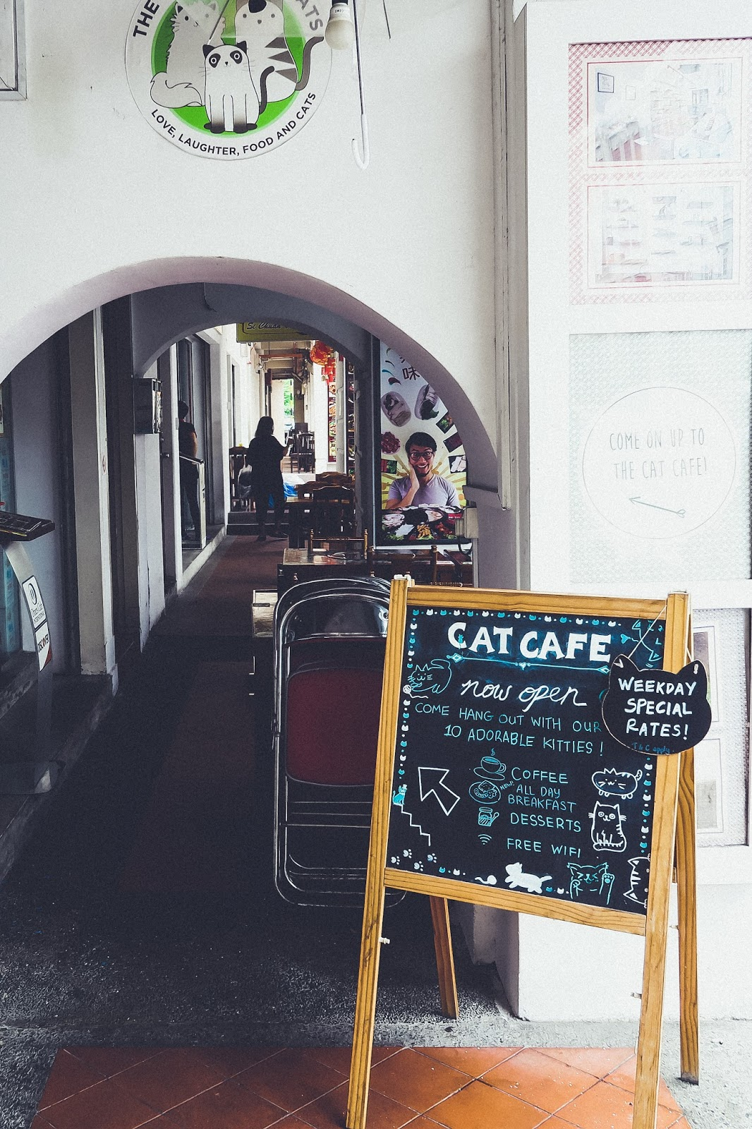 The Most Purrfect Cat Cafe in Singapore Right Meow