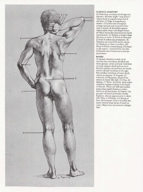 Anthony Ryder Figure Drawing Pdf
