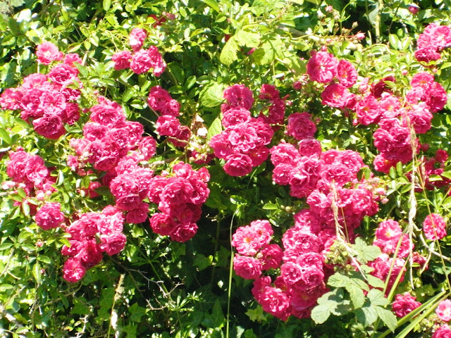 Gorgeous Pink Flowers,