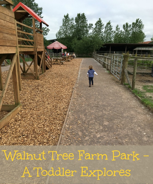 Walnut-tree-farm-park-A-Toddler-Explores-text-on-picture-of-toddler-walking