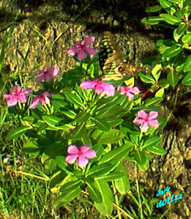 Cool Flower Butterfly. Kehijauan Rerumputan dan Dedaunan - Greeny Grasses