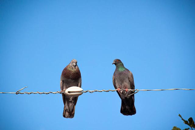 Y arriba unas palomas