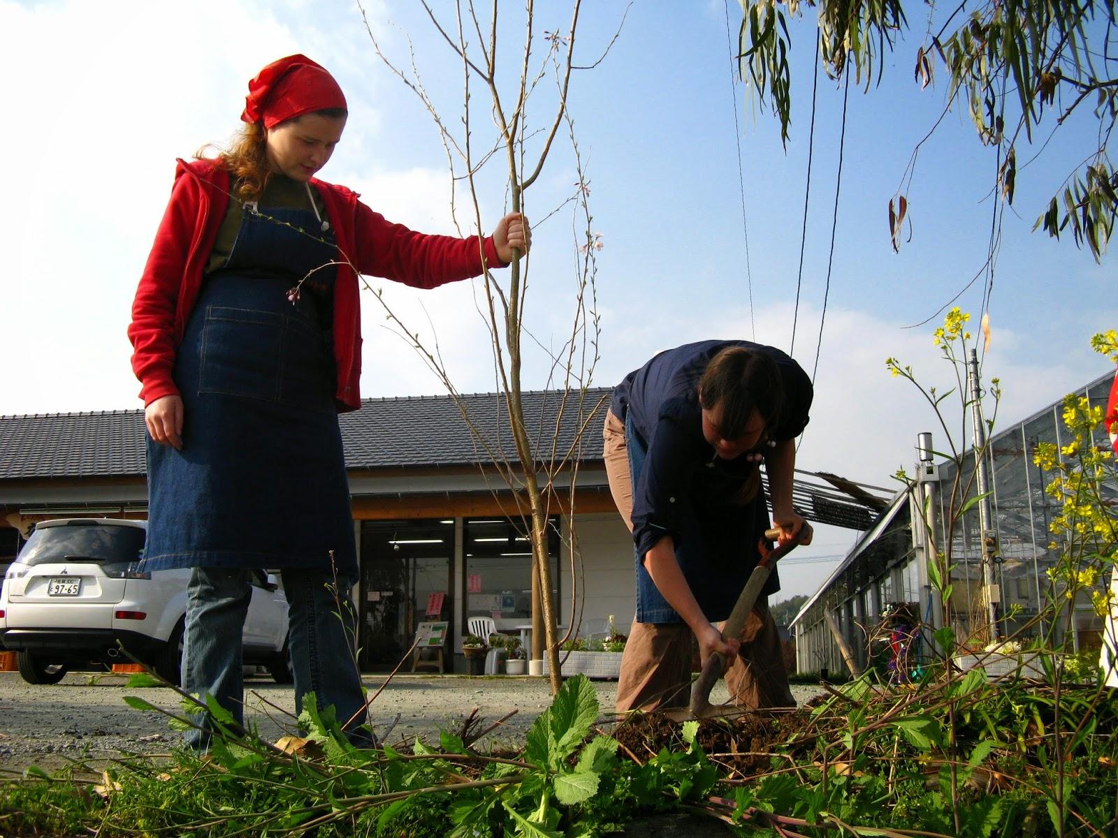 WWOOF Japan planting tree