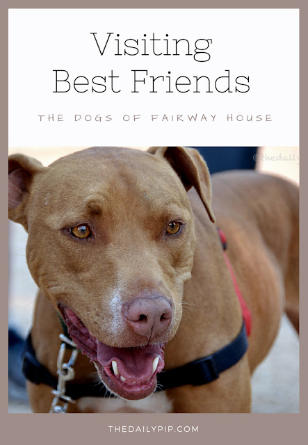Meet Lotti and the other dogs from Best Friends' Fairway House