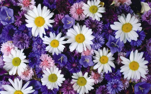 Foto paarse en witte bloemen