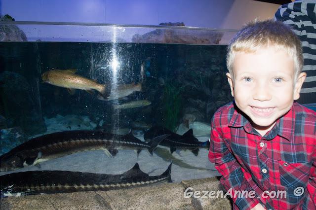 oğlum akvaryumdaki balıklar arasında eğlenirken, Turkuazoo Forum İstanbul AVM