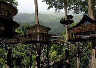 hoteles casa de arbol en el mundo
