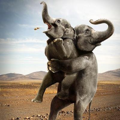 fotomontaje elefantes