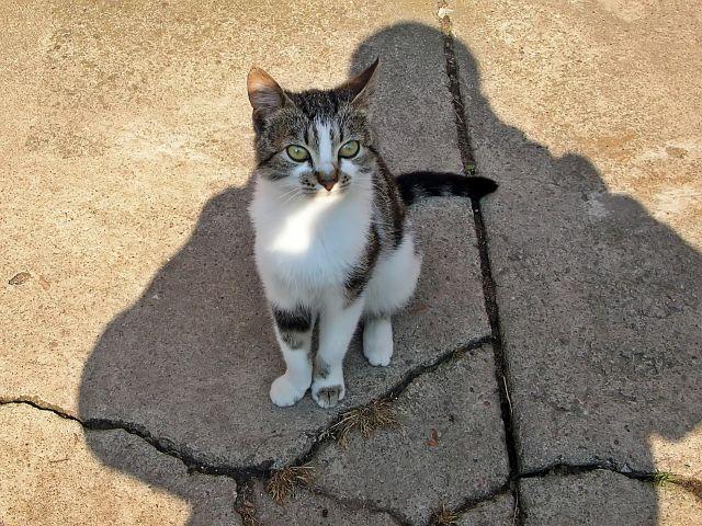 cień, kot, fotograf, zwierzęta domowe