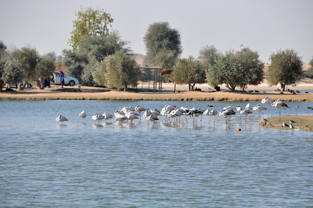 The lakes of Al Qudra.