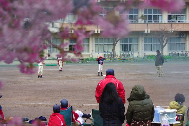伊豆・河津櫻祭,